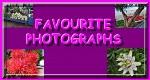 Favouorite Photographs