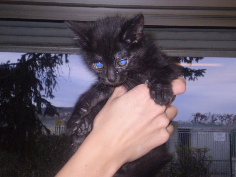 VIRGIN (chaton noir) Catty_12