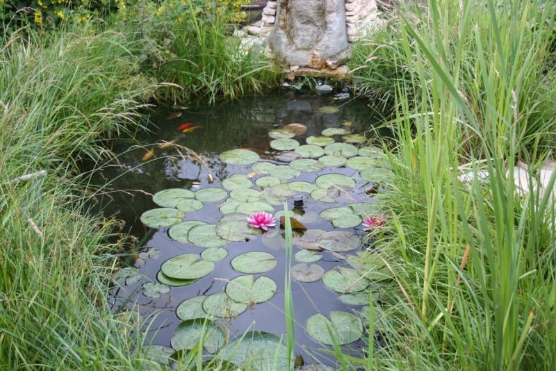 Les bassins de Rot68 Img_6311