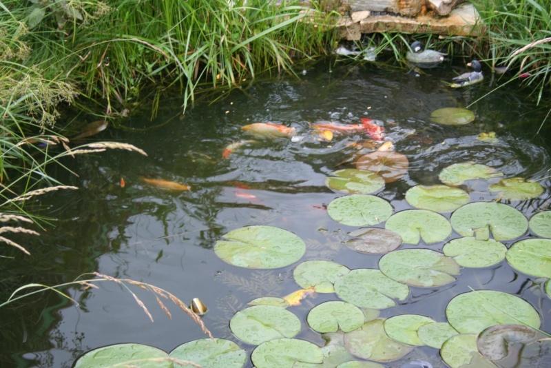 Les bassins de Rot68 Img_6312