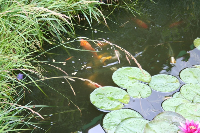 Les bassins de Rot68 Img_6313