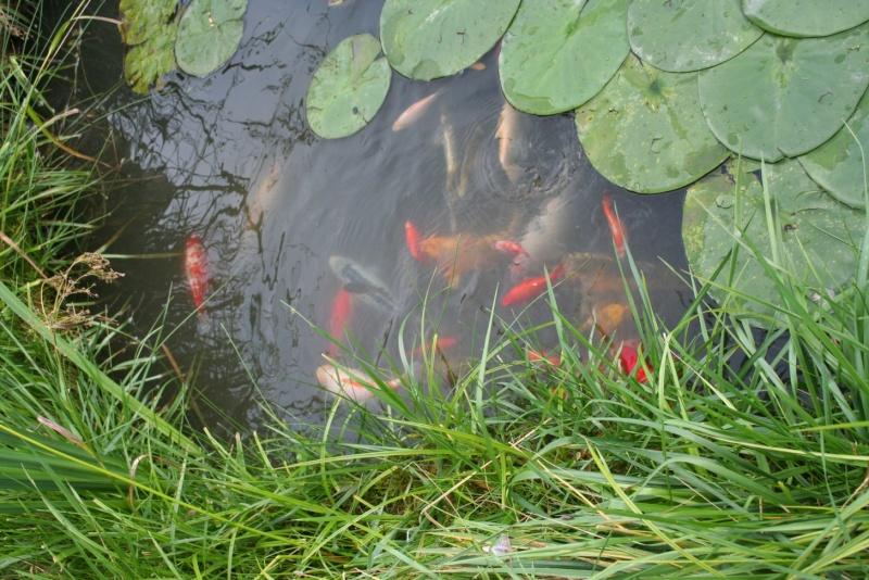 Les bassins de Rot68 Img_8010