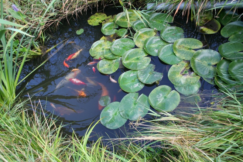 Les bassins de Rot68 Img_9315