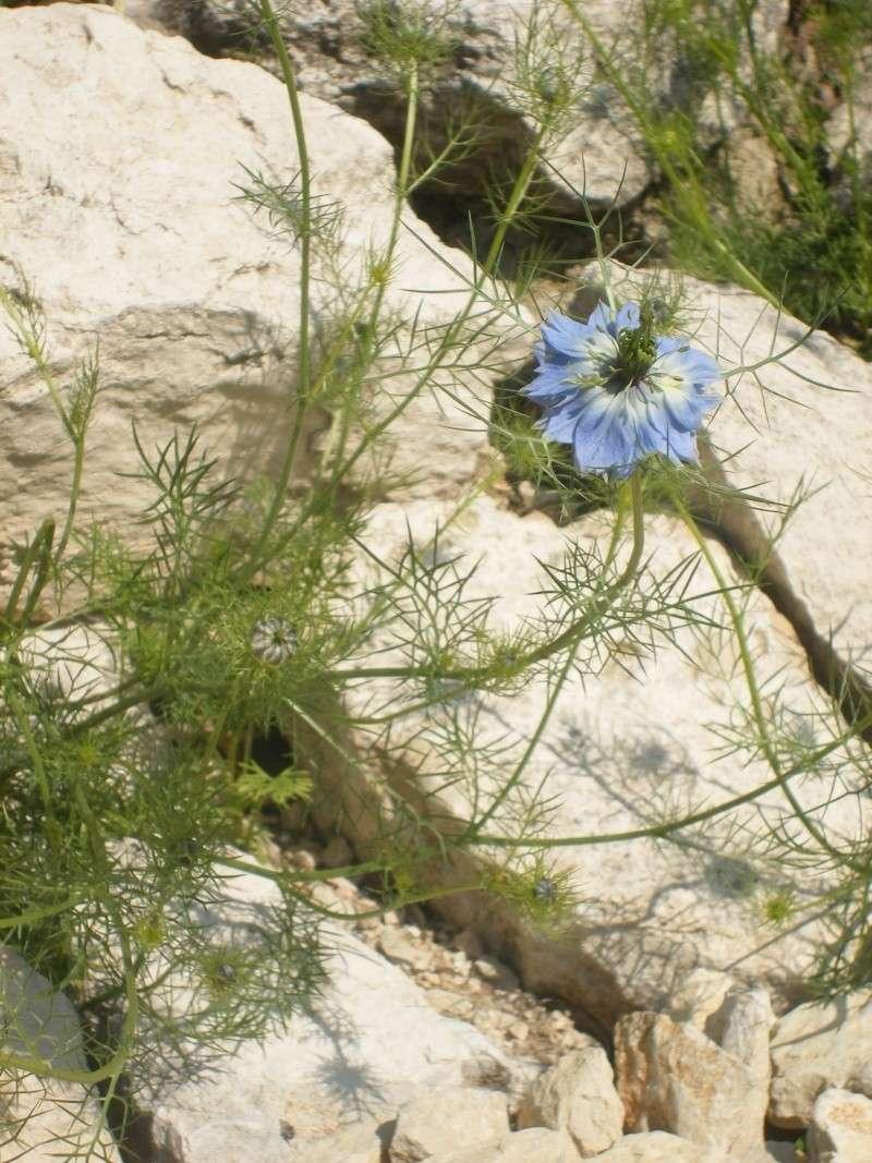 Les fleurs bleues Dscf0012