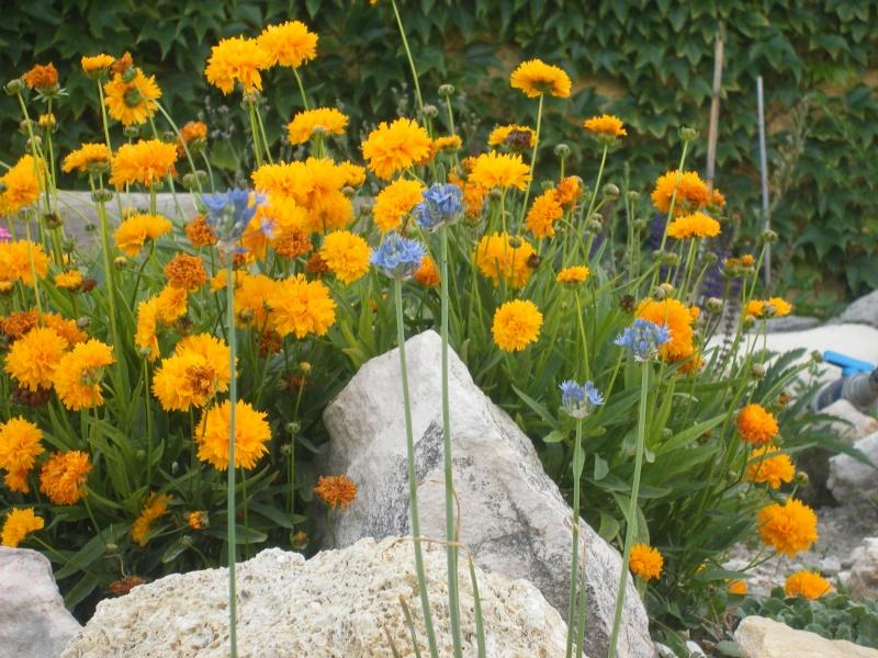 Les fleurs bleues Dscf0013