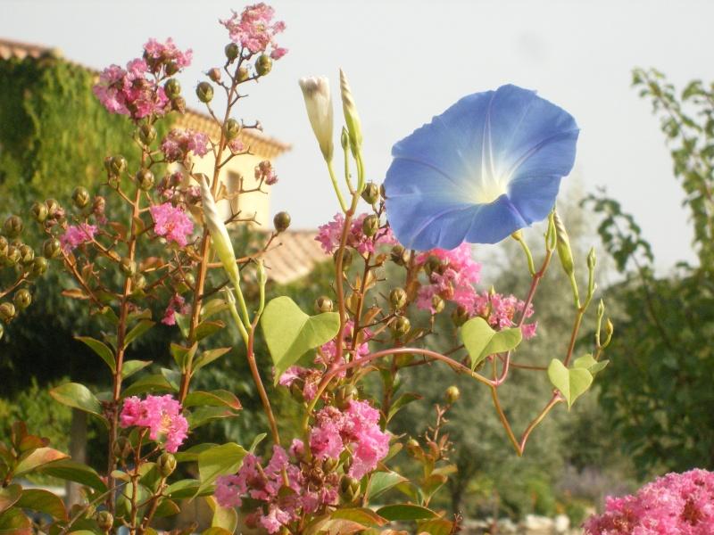 Les fleurs bleues Dscf0014