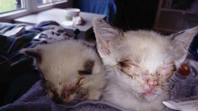 Photos des chats sauvés, avant/après - Page 9 34201310