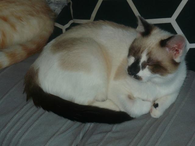 Photos des chats sauvés, avant/après - Page 9 P1130933