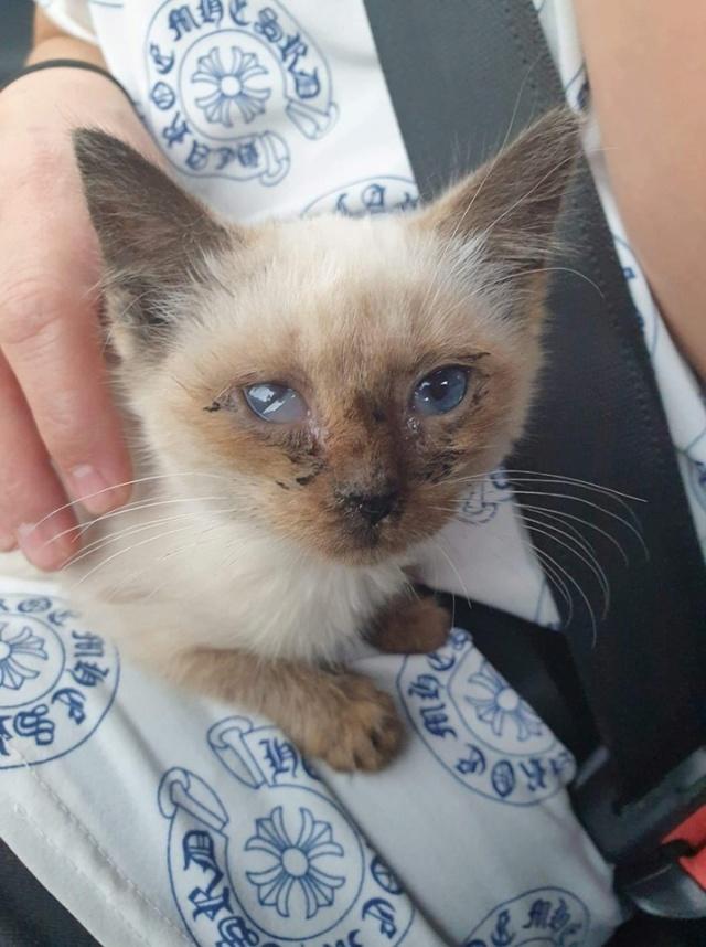 Photos des chats sauvés, avant/après - Page 11 P1140127