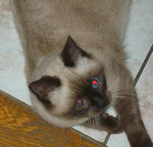 Photos des chats sauvés, avant/après - Page 11 P1140315