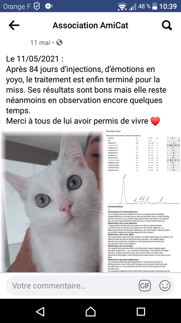 La PIF (péritonite infectieuse féline) - Page 2 Screen10