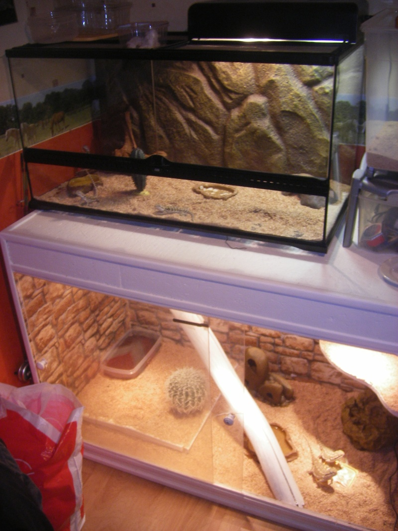 "Mes installations ""provisoires"" Reptil18"
