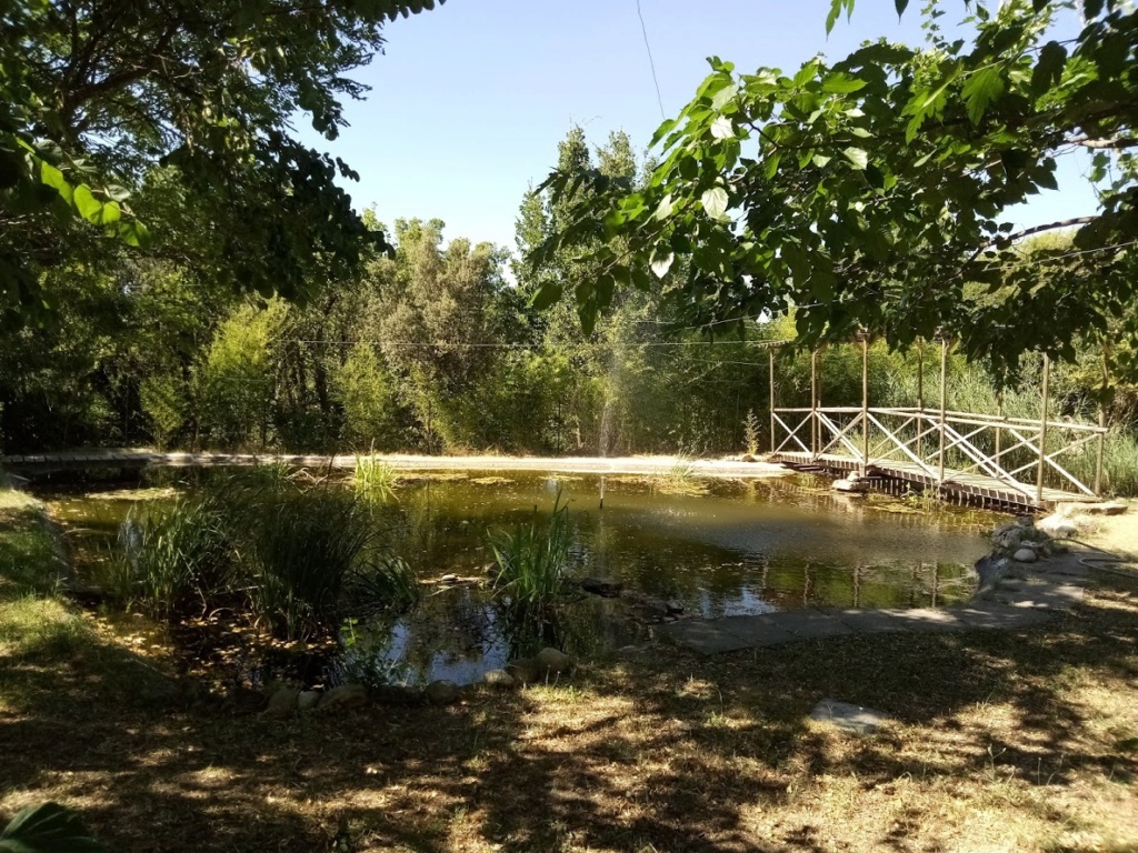 Bassin avec lagunage et pont Img_2012