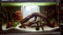 Reprise de l'aquariophilie : projet Lido 120 L 20200811