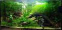 Liste positive contre les NACs: l'aquario en danger - Page 4 Img_2023