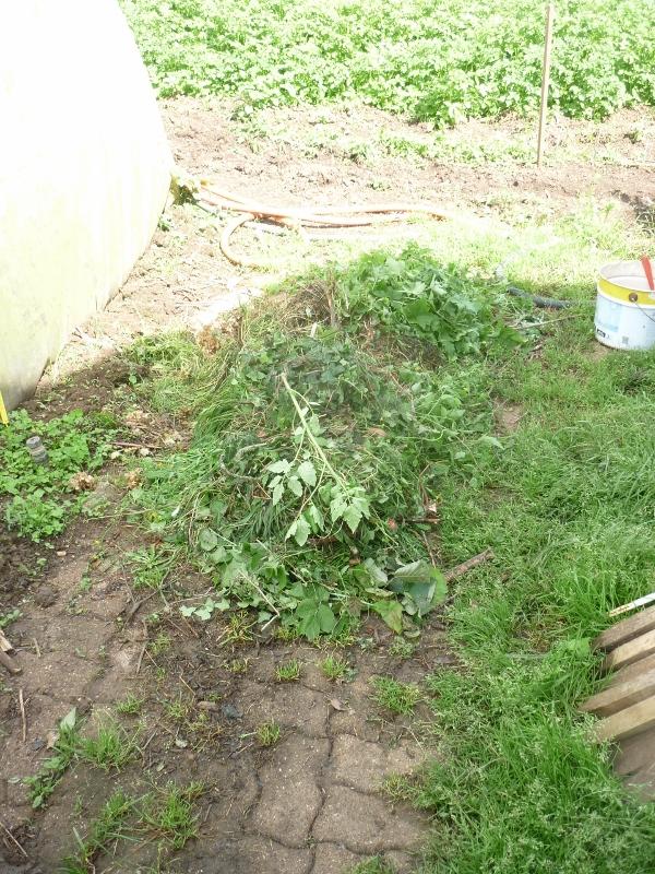 semis des plants P1180414