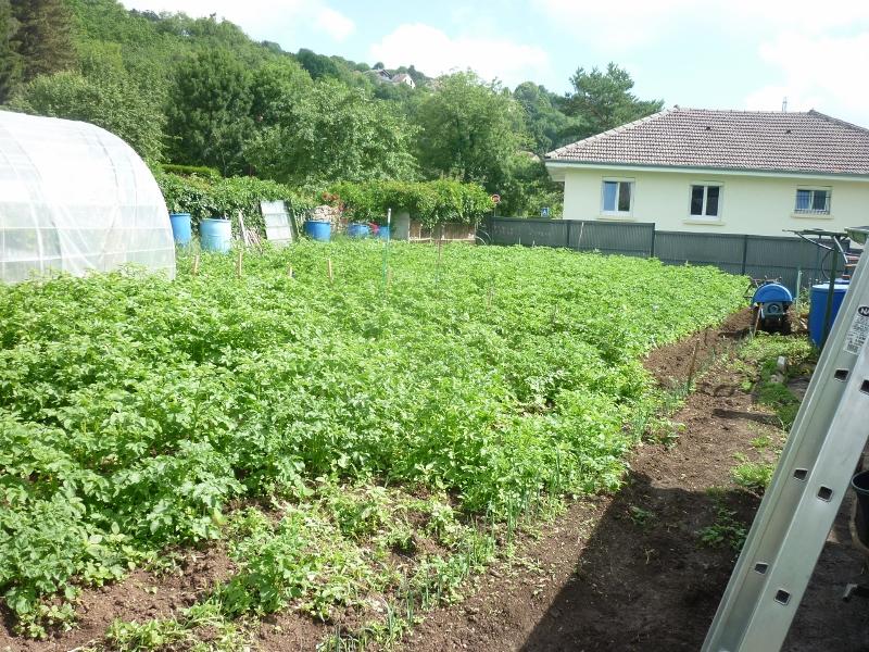 semis des plants P1180415