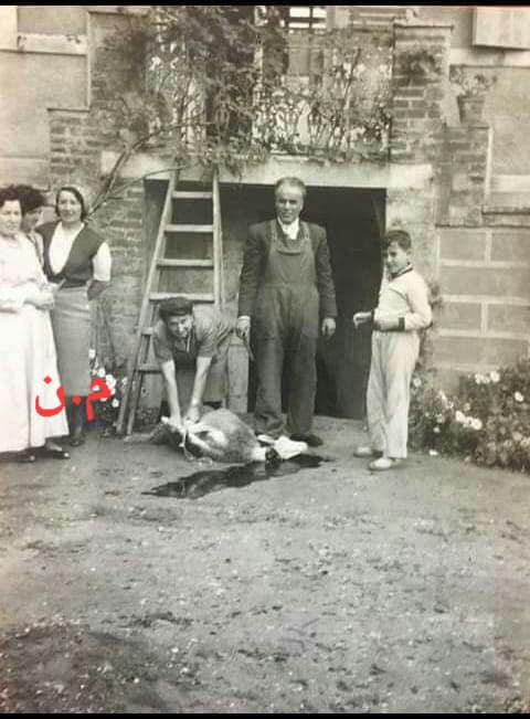 بورقيبة يذبح علوشو وحدو 79079110