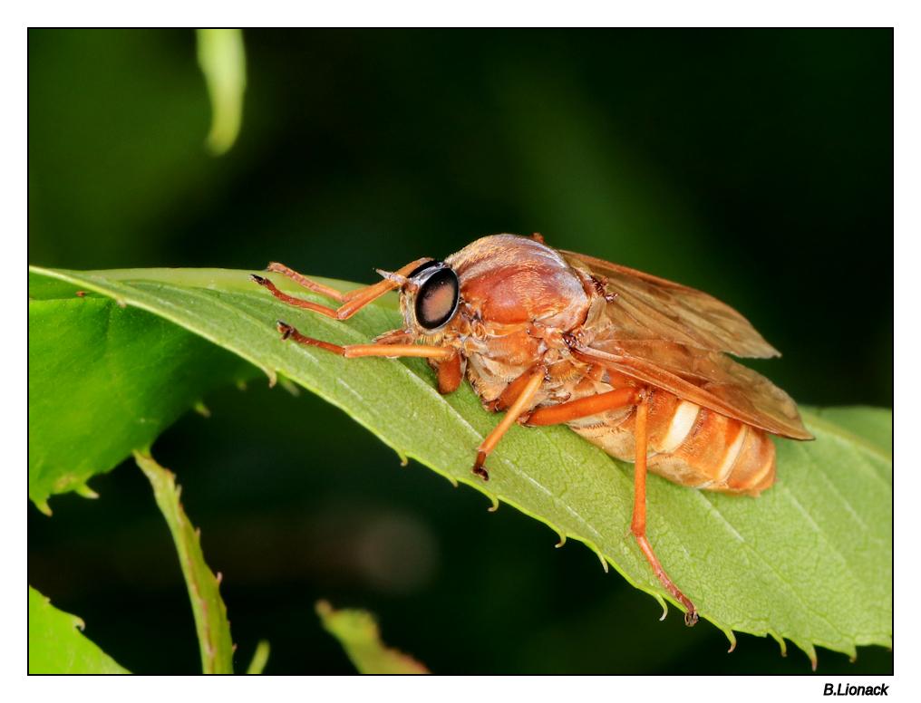 Insecte inconnu !!! Identi10