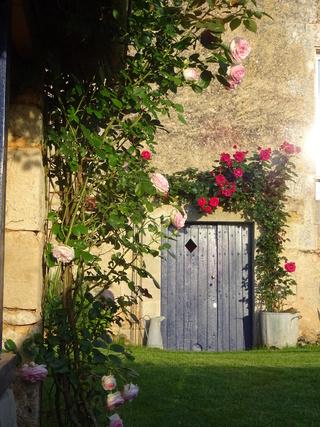 le petit salon de thé pour dire bonjour en passant  - Page 20 Jardin13