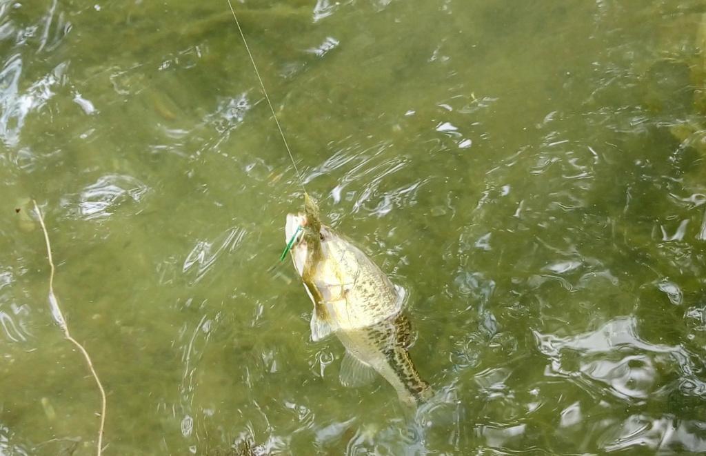 Reprise de la pêche  Minibl10