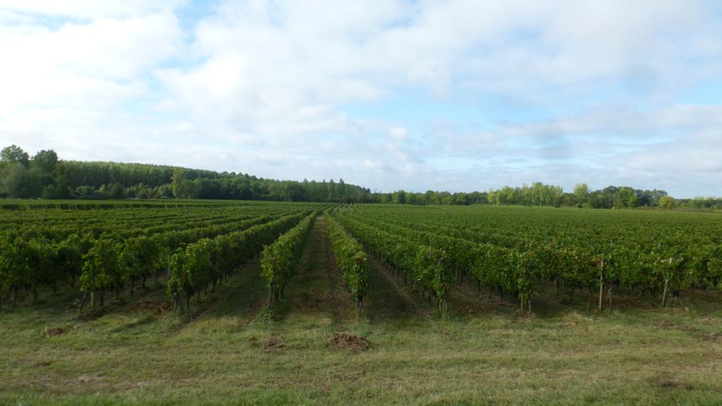Région entre deux mers près de Bordeaux P1070613