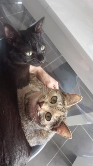 MINA (Howi) et NOUKI (Moki) 20190410