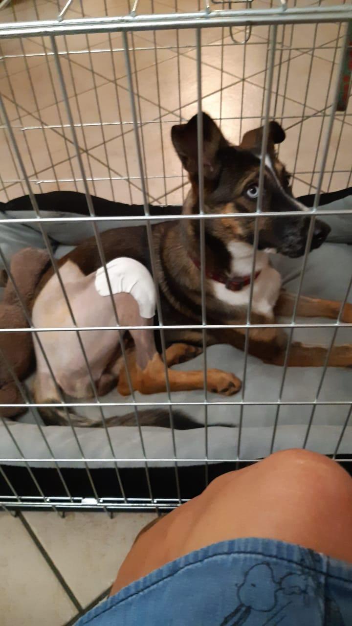 LAGOON, jeune chienne femelle d'environ 7 mois - Marrainée par Pat84 - Réservée par Karine Img-2074