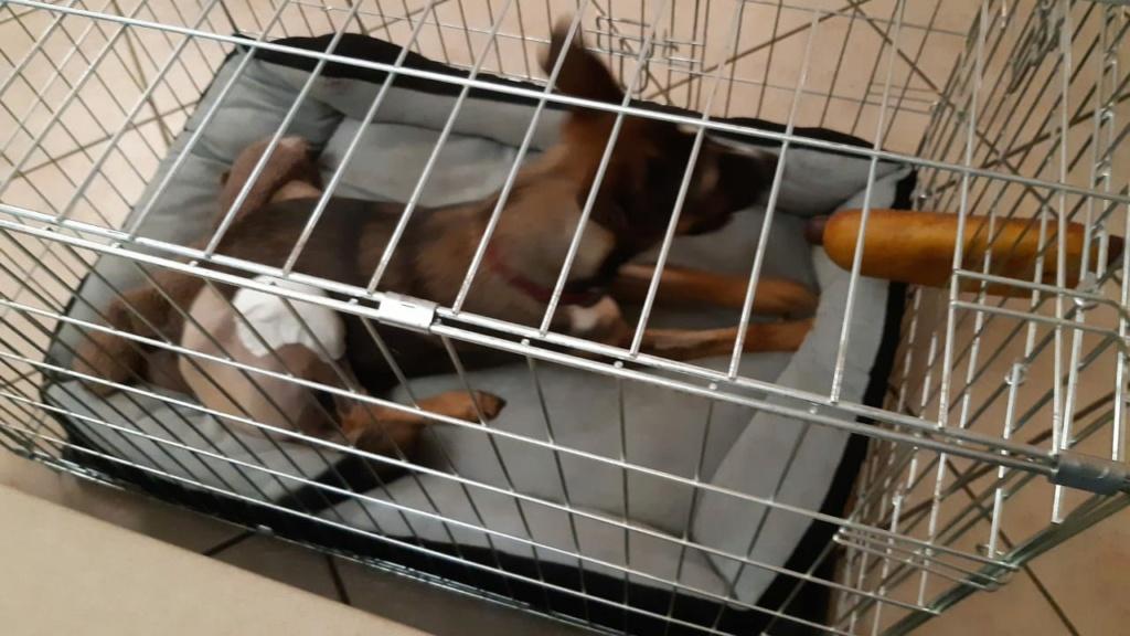 LAGOON, jeune chienne femelle d'environ 7 mois - Marrainée par Pat84 - Réservée par Karine Img-2076