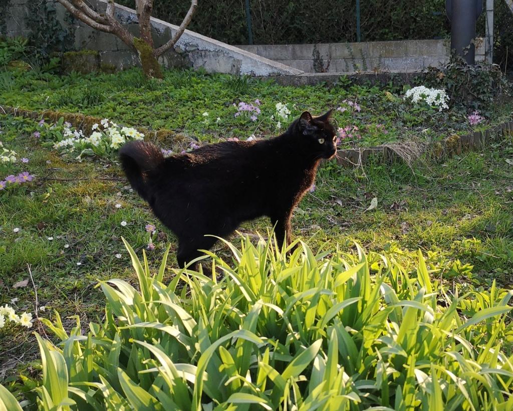 FLEUR panthère noire de 3 ans - marrainée par Steffi, Cococado et Sourissseau - Page 2 Img_2091