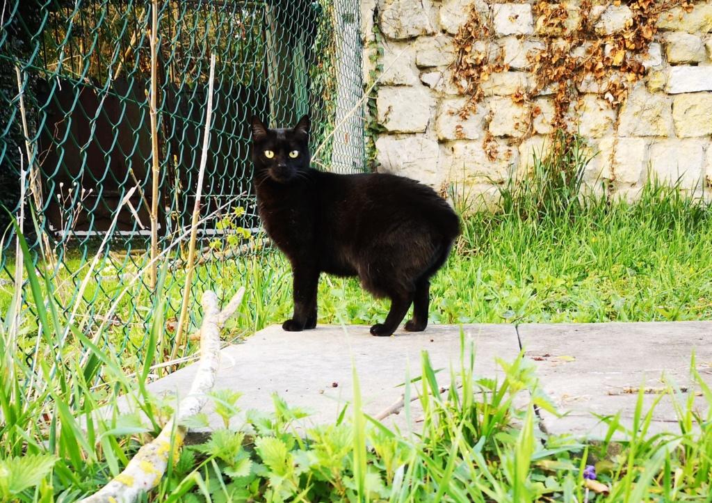 FLEUR panthère noire de 3 ans - marrainée par Steffi, Cococado et Sourissseau - Page 2 Img_2092
