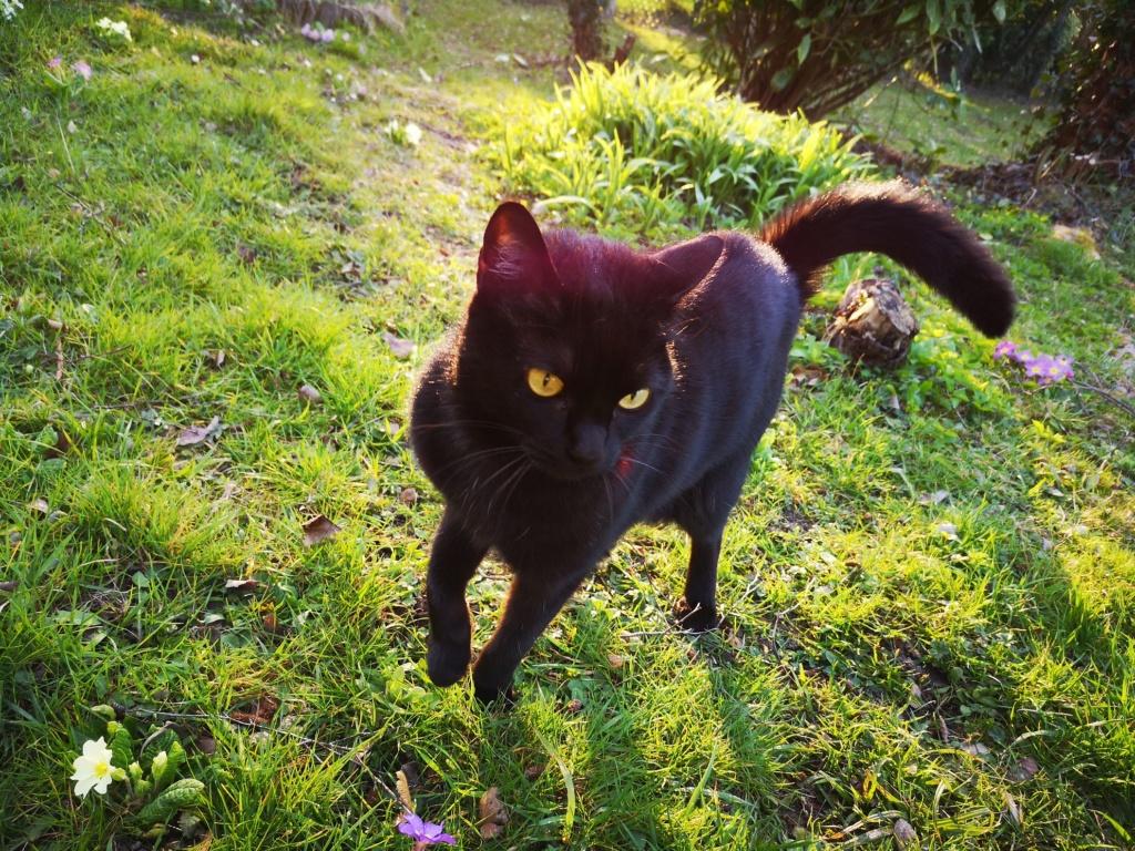 FLEUR panthère noire de 3 ans - marrainée par Steffi, Cococado et Sourissseau - Page 2 Img_2093