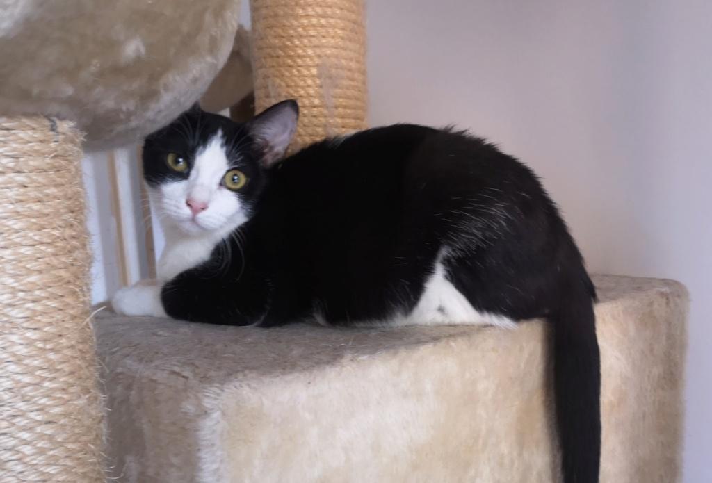 LEELOO, jolie puce noire et blanche - marrainée par Ana et Floby - réservée par Elodie et Denis Img_2165