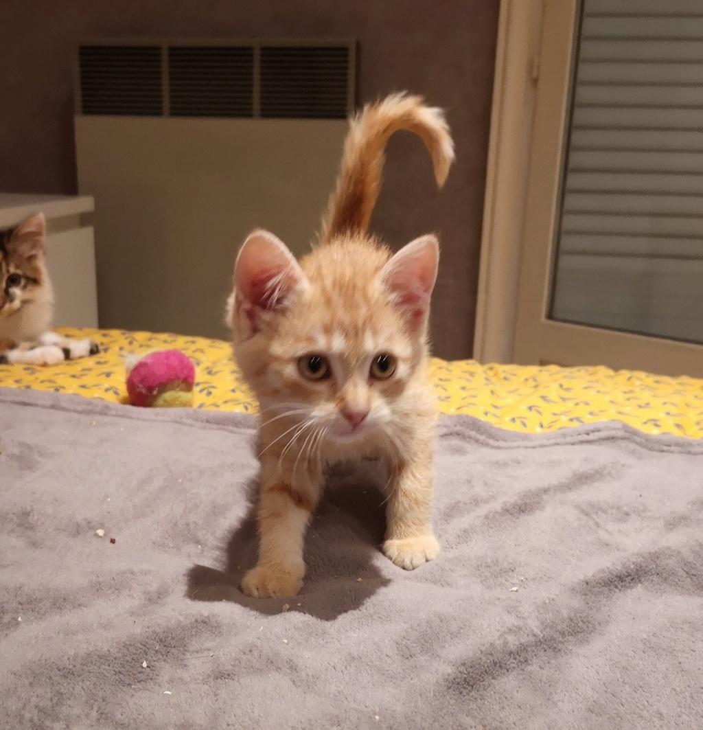 OEN, chaton roux de 3 mois - marrainé par Mahé Img_2215