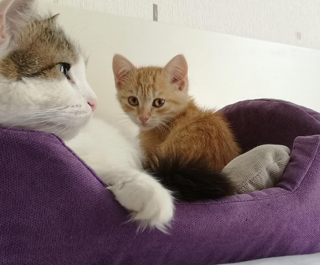 OEN, chaton roux de 3 mois - marrainé par Mahé Img_2228