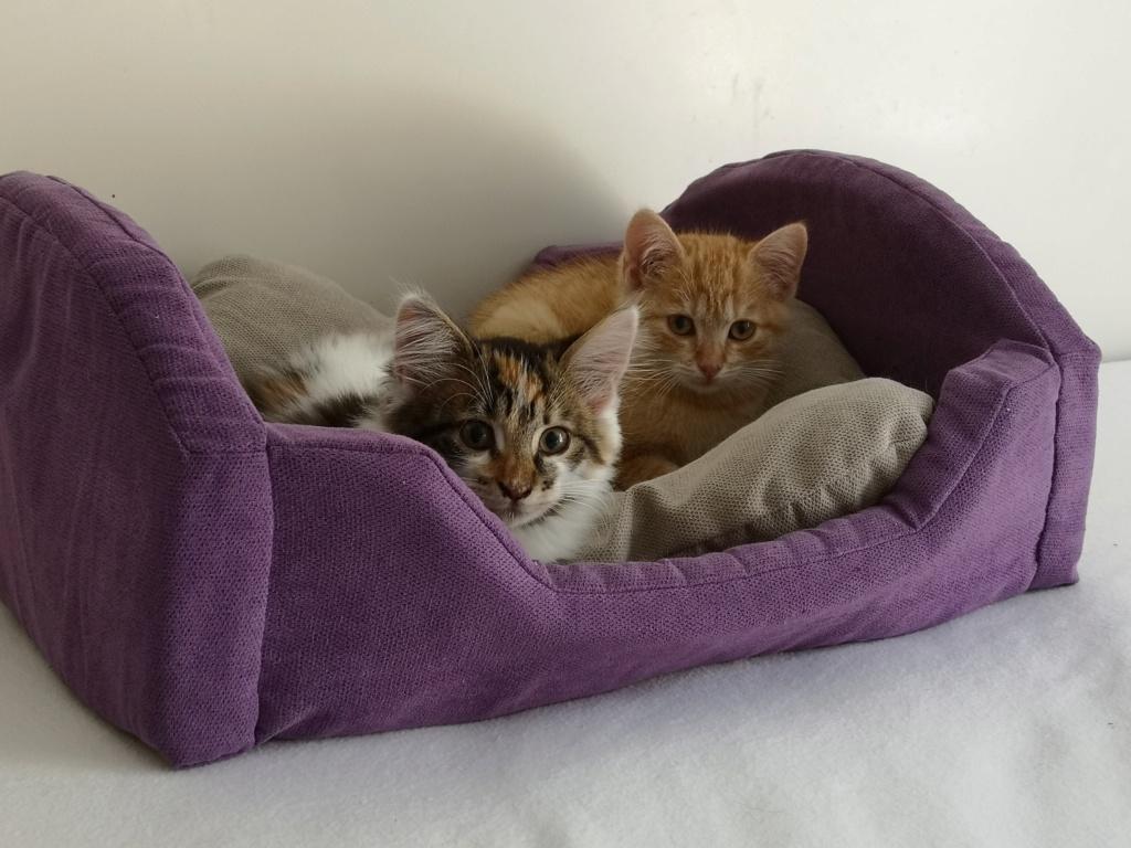 OEN, chaton roux de 3 mois - marrainé par Mahé Img_2230