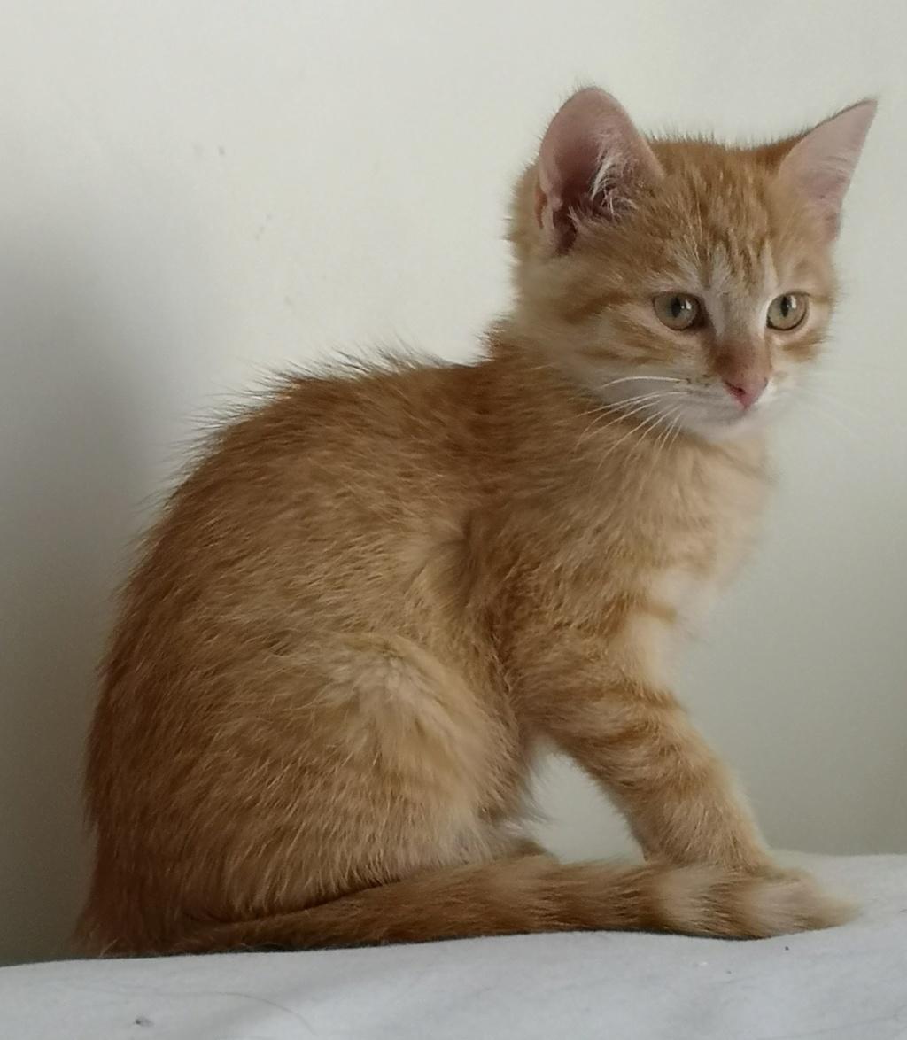 OEN, chaton roux de 3 mois - marrainé par Mahé Img_2232