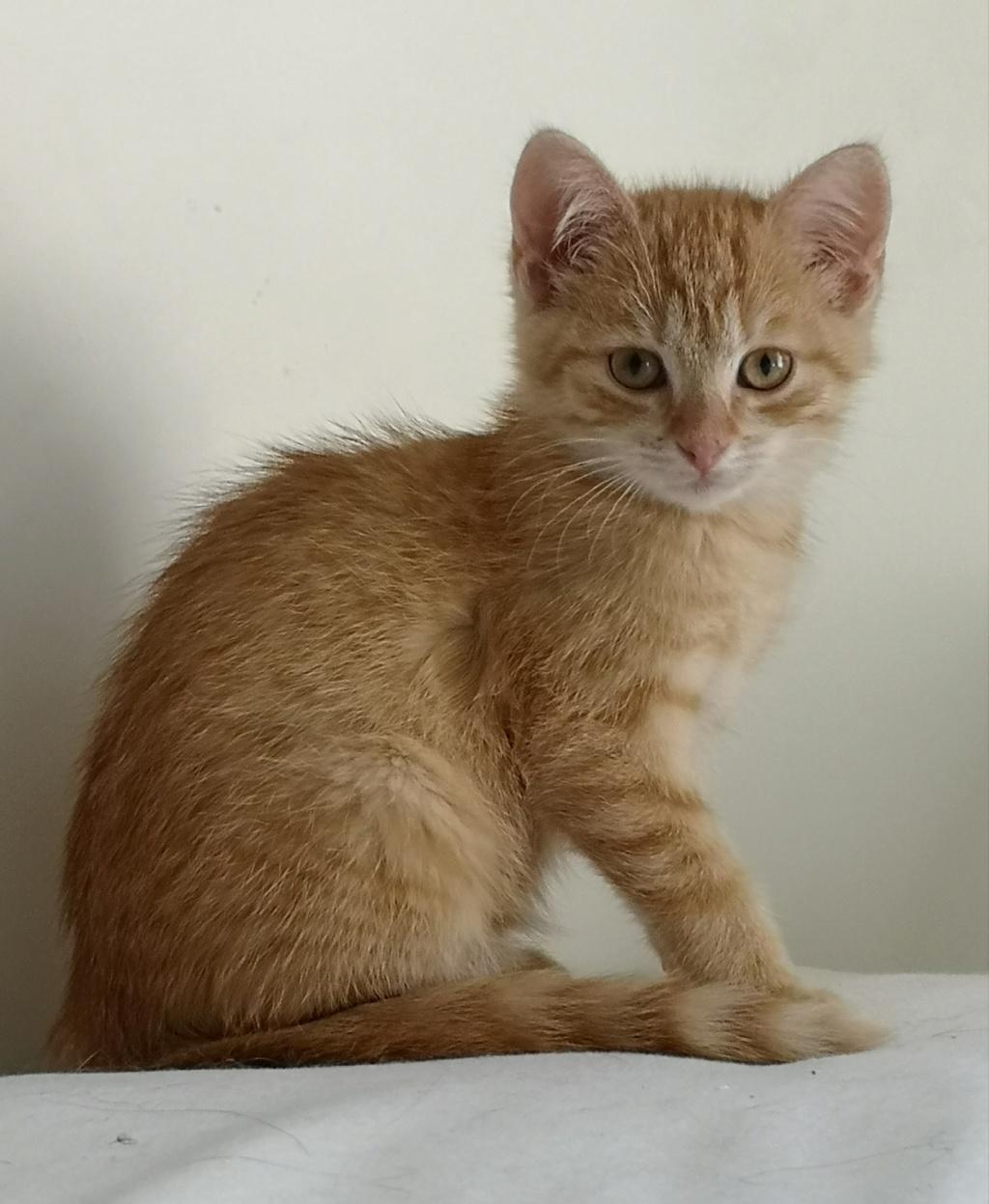 OEN, chaton roux de 3 mois - marrainé par Mahé Img_2233