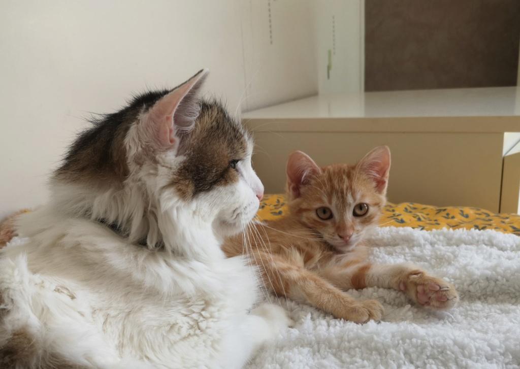 OEN, chaton roux de 3 mois - marrainé par Mahé Img_2251