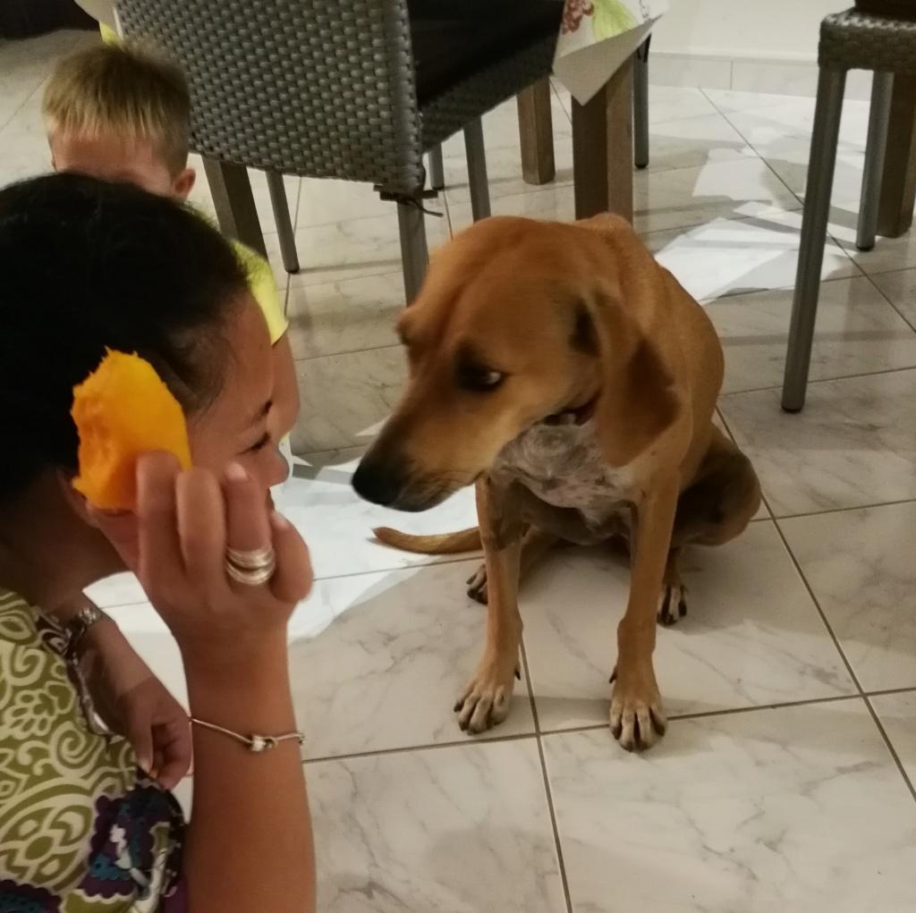 BELOUVE, chienne de 2 ans - marrainée par Maud - réservée par Virginie Img_2359