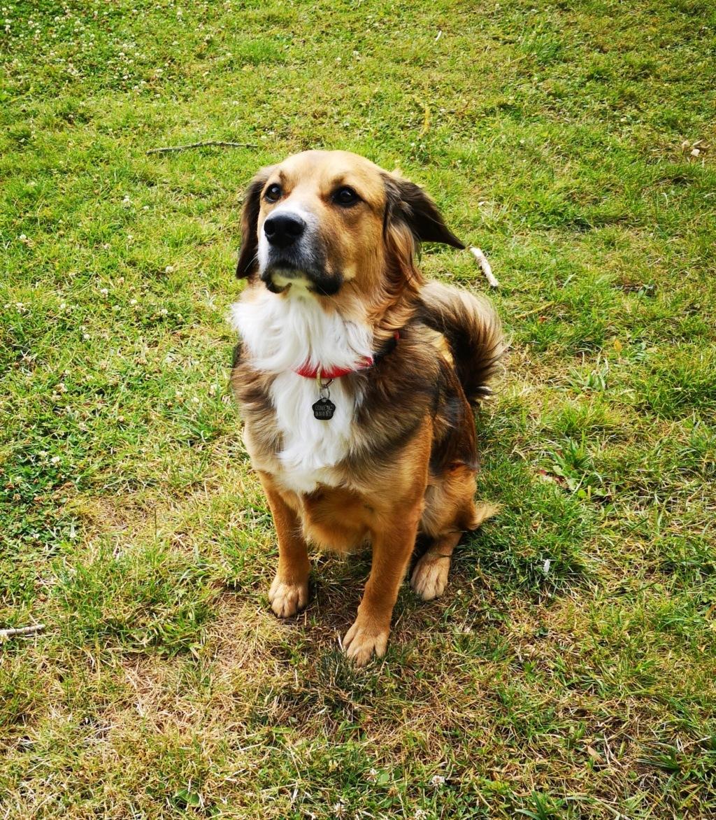 PUNCHY - chien mâle de 1 an - marrainé par Patricia - en observation chez Alpha Dog's House Img_2402