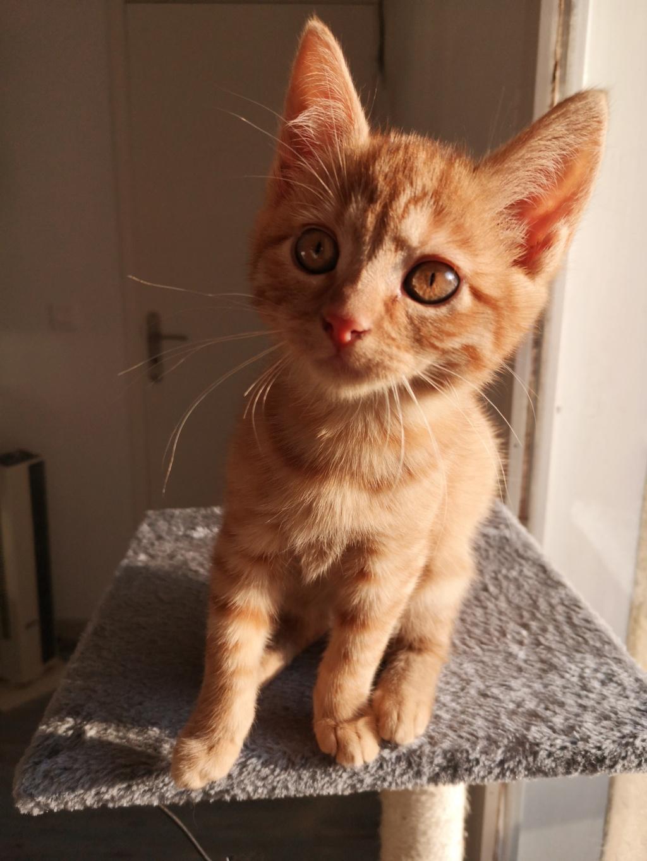 GINNY (Ginger) Img_2519