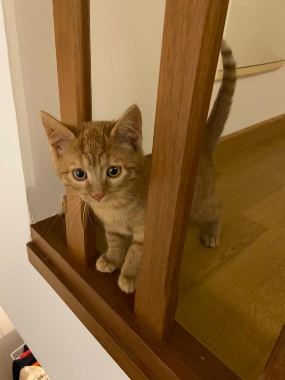 GINNY (Ginger) Img_2521
