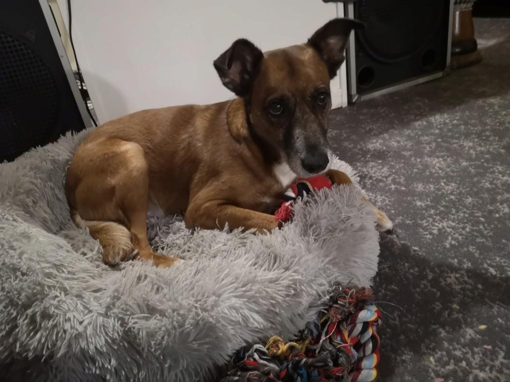 PAGNOL, chien de 7 ans environ pour 20 kg - Marrainé par Pat84 Img_2587
