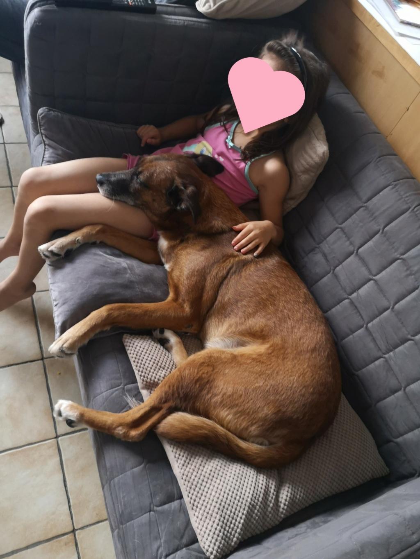 PAGNOL, chien de 7 ans environ pour 20 kg - Marrainé par Pat84 Img_2588