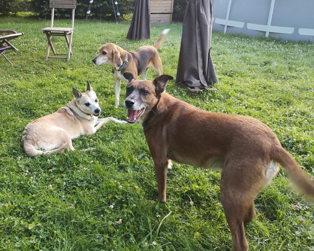 PAGNOL, chien de 7 ans environ pour 20 kg - Marrainé par Pat84 Img_2589