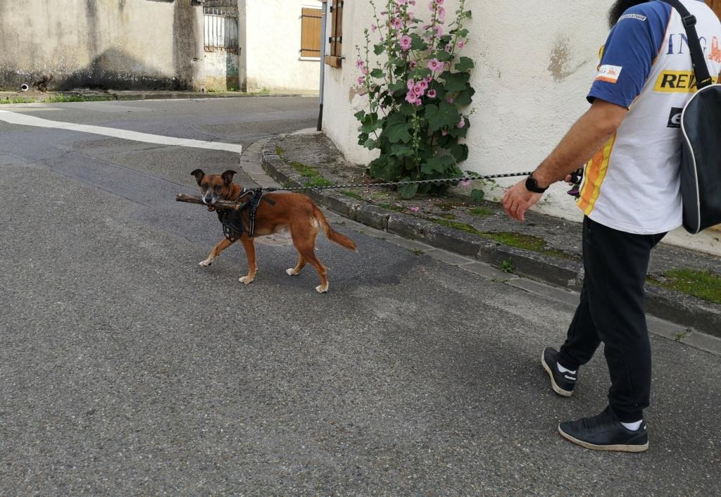 PAGNOL, chien de 7 ans environ pour 20 kg - Marrainé par Pat84 Img_2590