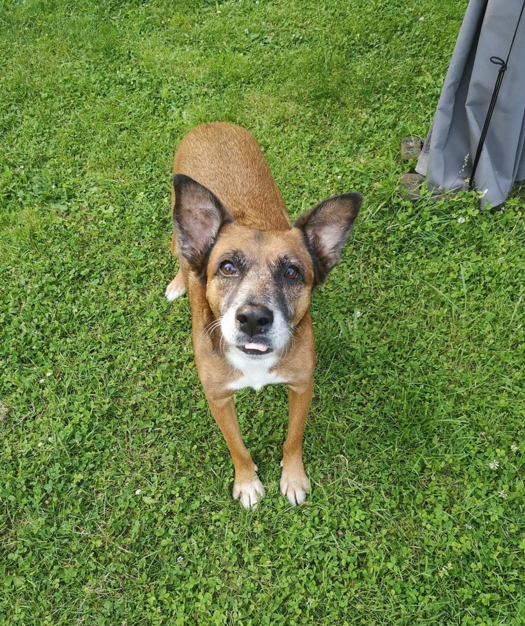 PAGNOL, chien de 7 ans environ pour 20 kg - Marrainé par Pat84 Img_2596