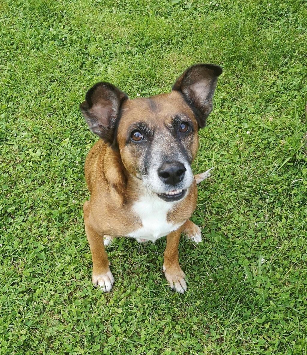 PAGNOL, chien de 7 ans environ pour 20 kg - Marrainé par Pat84 Img_2597