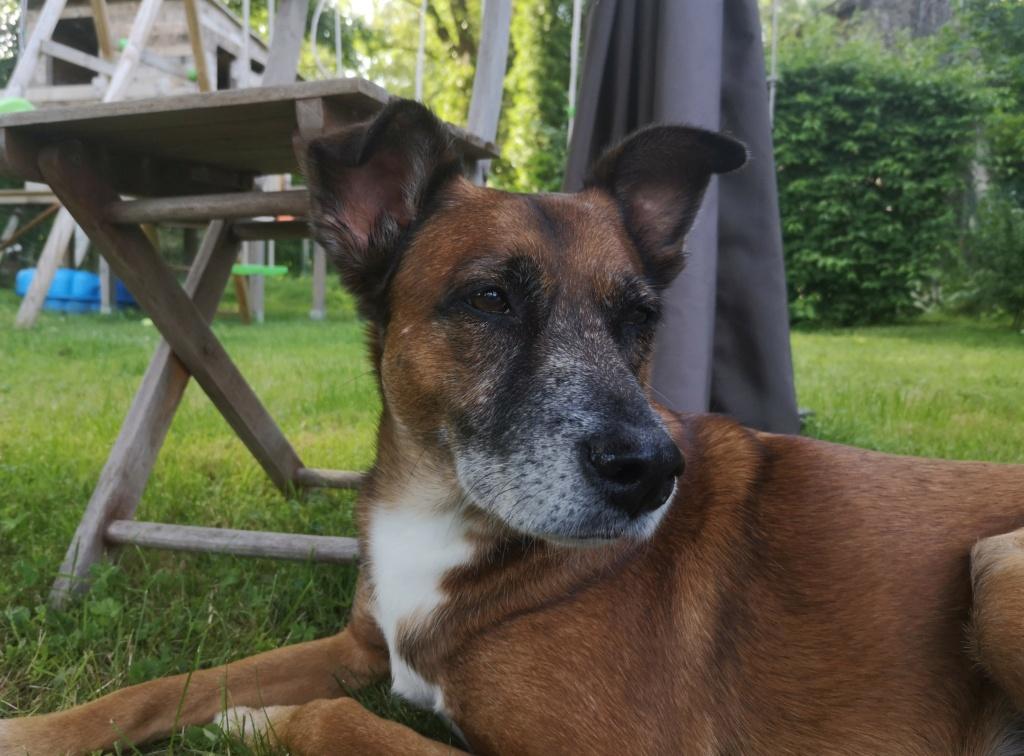 PAGNOL, chien de 7 ans environ pour 20 kg - Marrainé par Pat84 Img_2598